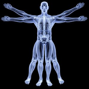 human body relating to the benefits of sr9009