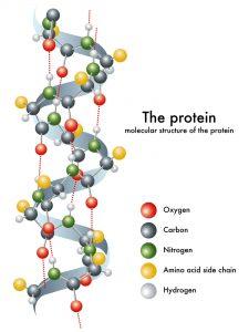 Protein molecule