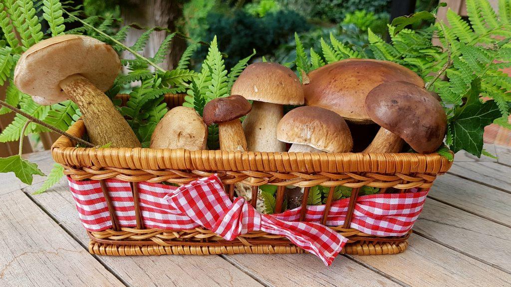 mushroom weight loss